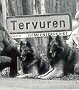 Tervuren visitors